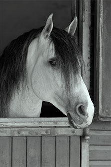 Re-Ride LLC Home, Consignment Tack Shop, Columbus, NC